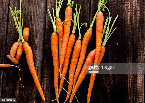carrots - carolafink stock photos and pictures