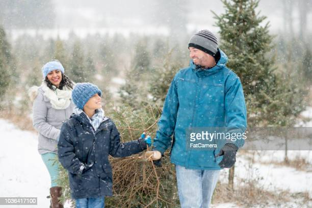 carrying a christmas tree - christmas tree farm stock pictures, royalty-free photos & images