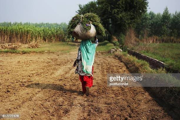 Carrying Silage For Domestic Animal