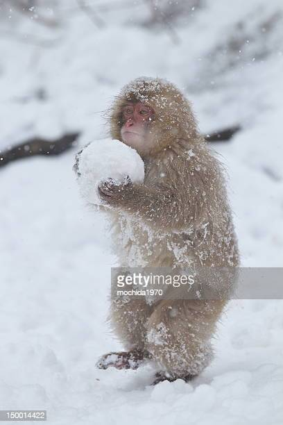 Carrying snow ball
