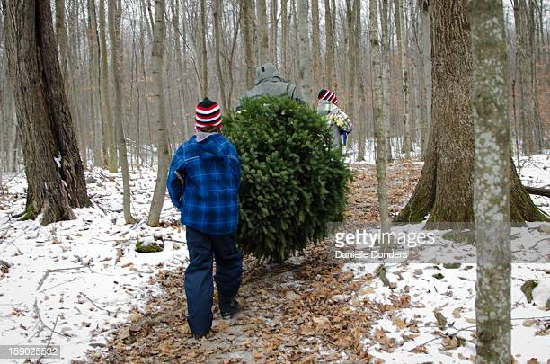 Carrying the Christmas tree through the forest