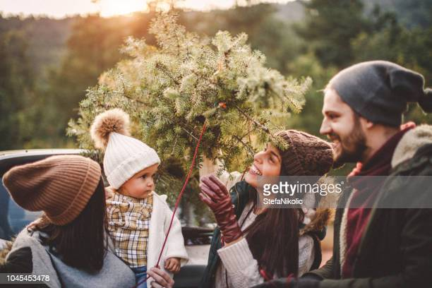 carrying the tree - christmas tree farm stock pictures, royalty-free photos & images