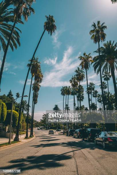 cars on road amidst trees against sky - city of los angeles stock pictures, royalty-free photos & images