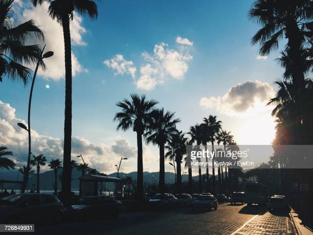 Cars On Street Amidst Palm Trees Against Sky During Sunset