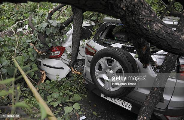 Cars were damaged after big tree collapsed due sudden thunderstorm followed by rain at Mata Sunder road on May 30 2014 in New Delhi India At least...