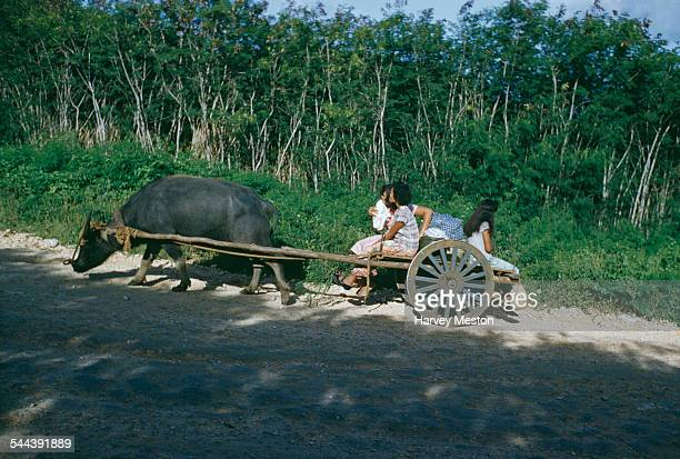 A cart pulled by a water buffalo in Guam circa 1965