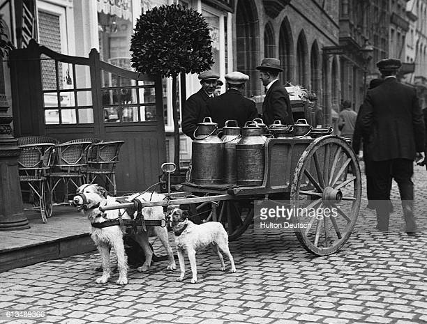 A cart pulled by dogs which is used to deliver milk stands in the street