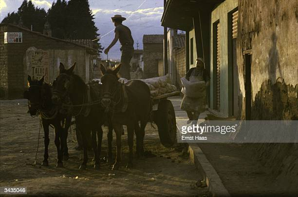 A cart pulled by three donkeys is loaded with sacks in a Mexican street