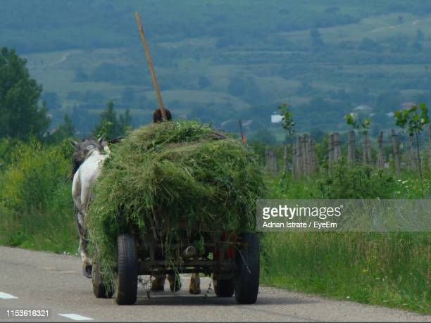 Cart With Grass On Road