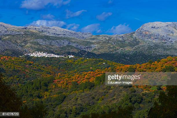 Cartajima, Valle del Genal, Chesnut forest , Autumn, Genal Valley, Genal river valley, Serrana de Ronda, M_laga province, Andalusia. Spain.