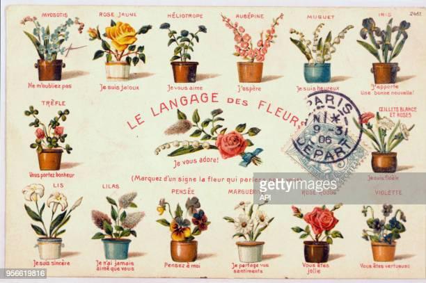 Carte postale de botanique représentant le langage des fleurs en 1906