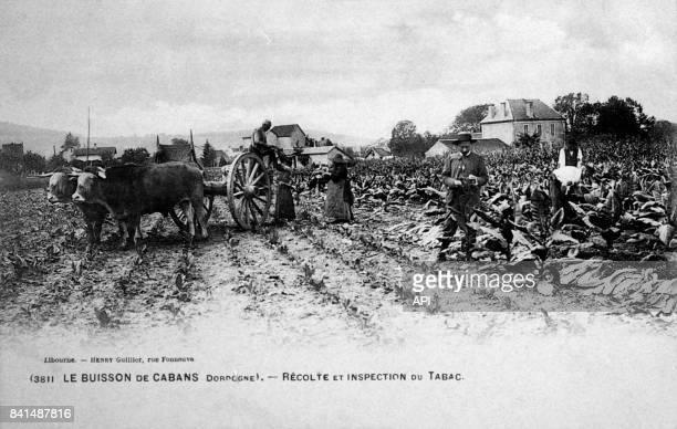Carte postale illustrée par la photographie de paysans à la récolte et à l'inspection du tabac à Le Buisson de Cabans en Dordogne en France