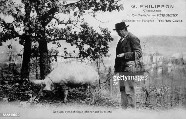 Carte postale illustrée par la photographie d'un paysan à la recherche de truffes cacao avec un cochon truffier dans le Périgord en France