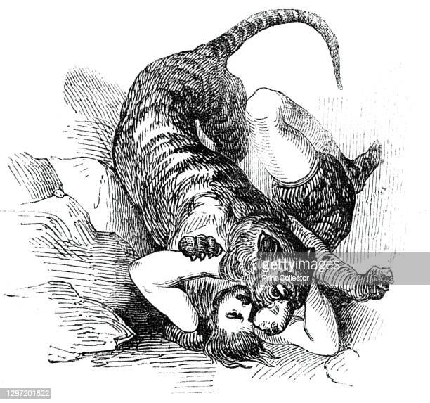 Carter's Tiger Feat, 1844. Circus act at Astley's Amphitheatre in London: 'Mr. Batty, the enterprising proprietor of this popular establishment, has...