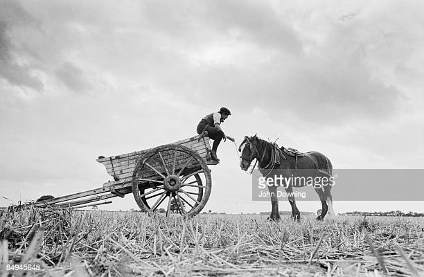 A carthorse on a farm in Yorkshire 1980