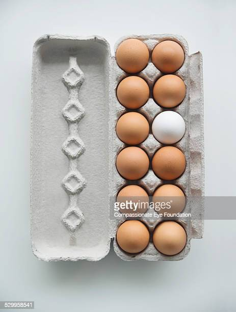"carton of brown eggs with one white egg - ""compassionate eye"" stock-fotos und bilder"