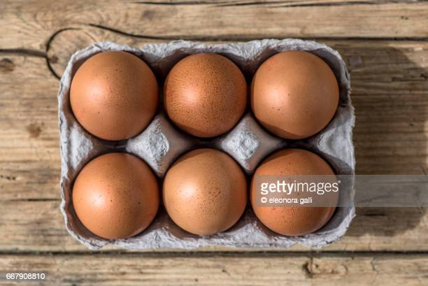 carton of eggs - huevo etapa de animal fotografías e imágenes de stock