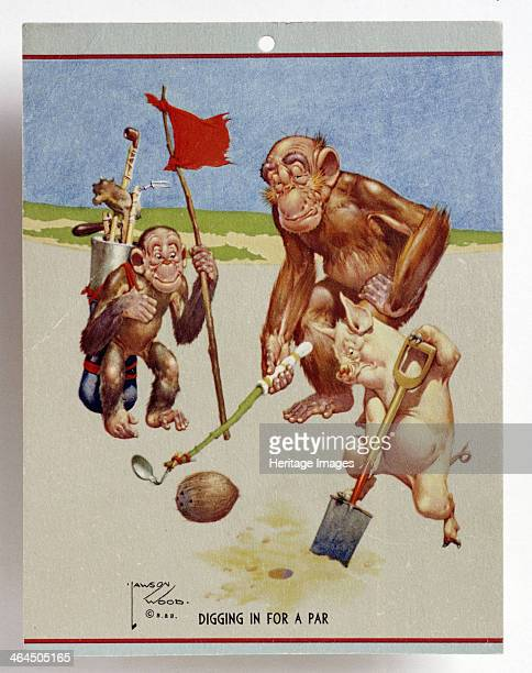 Cartoon with a golfing theme c1930s Digging in for a par Apes and a pig digging on a golf course