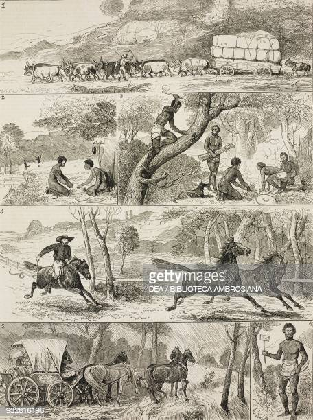 Carts horses and aborigines life in the backwoods of Queensland Australia illustration from the magazine The Graphic volume XVIII no 467 November 9...