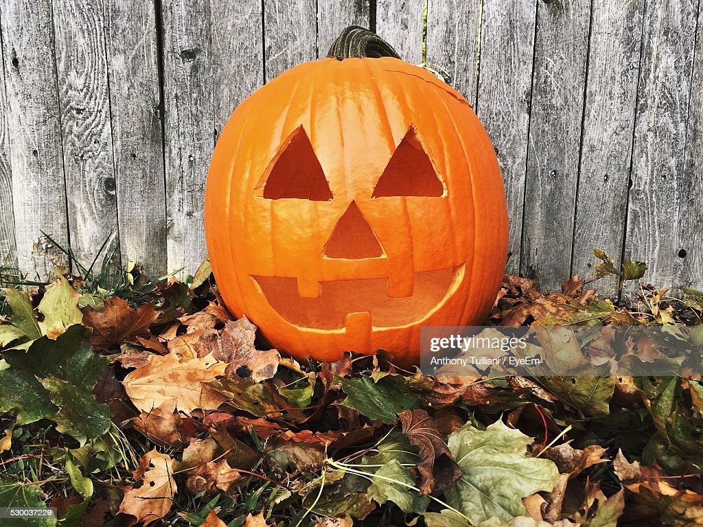 Carved Pumpkin On Leaves Against Fence : Stock Photo