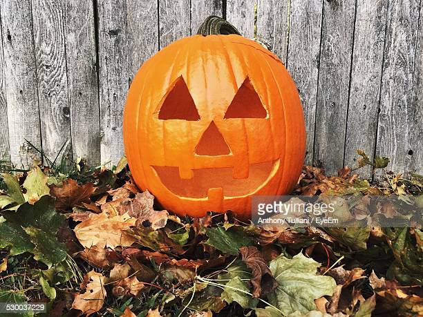 carved pumpkin on leaves against fence - halloween pumpkin stock photos and pictures