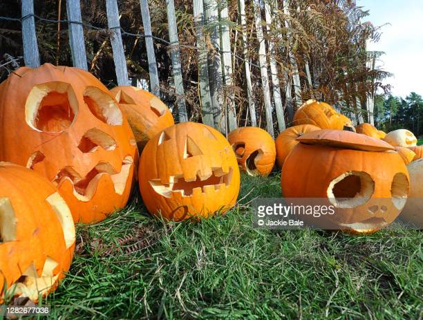 carved pumpkins - carving craft product stock pictures, royalty-free photos & images