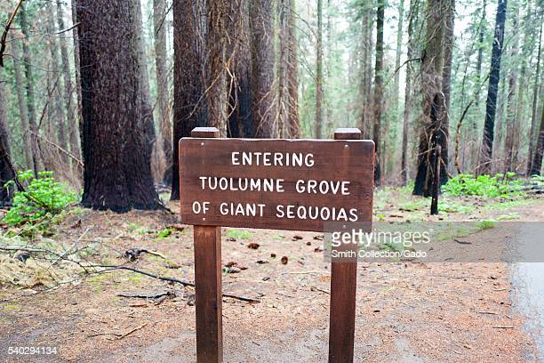 Carved wooden sign announcing the entrance to Tuolumne Grove of giant sequoia redwood trees in Yosemite National Park Yosemite Valley California 2016