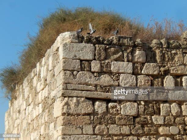 Casal des Plains, The first Crusader watchtower in the Holy Land, Year 1 099 CE, detail of the construction