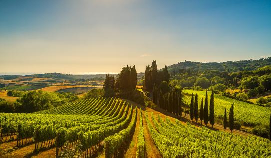 Casale Marittimo village, vineyards and landscape in Maremma. Tuscany, Italy. 909105552