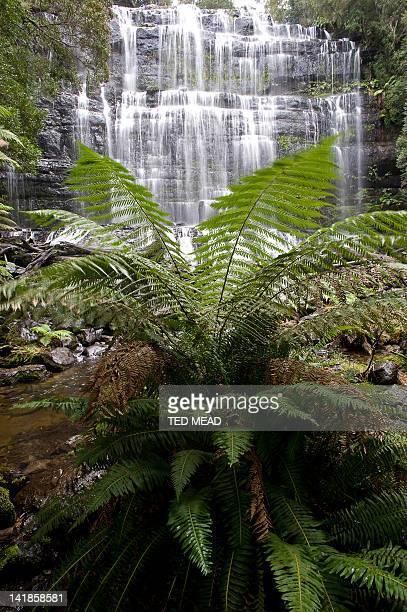 A cascade in the Mt Field National Park, Tasmania, Australia.