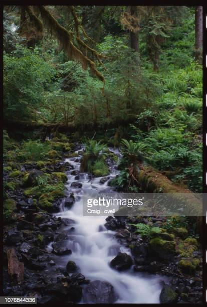 Cascading Brook in Hoh Rainforest