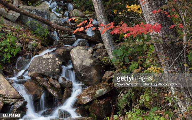 Cascading Waterfall in Great Smoky Mountains National Park