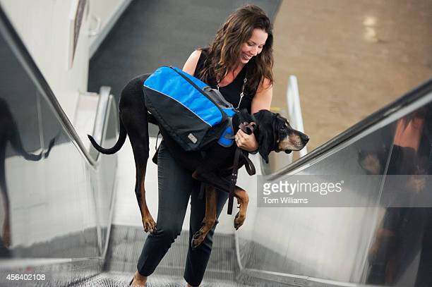 Cash and his owner Brooke Scannell from the office of Rep Katherine Clark DMass make their way up an escalator in Longworth Building September 30...