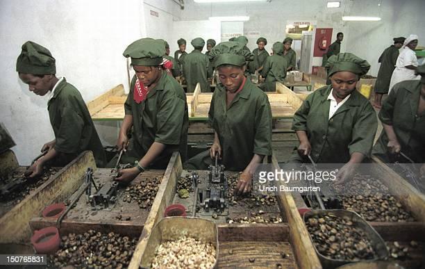 Cashewnut processing in Maputo
