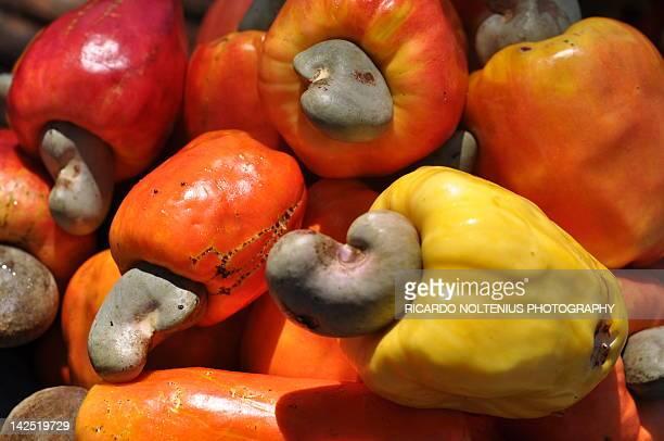 cashews - playa tamarindo fotografías e imágenes de stock
