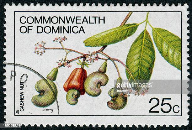 cashews stamp - dominica stock pictures, royalty-free photos & images