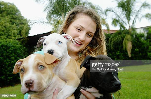 Cassie Fitzsummons from Punchbowl with 9 week old American pitbull puppies bred by her father 14 May 2005 SMH Picture by LEE BESFORD