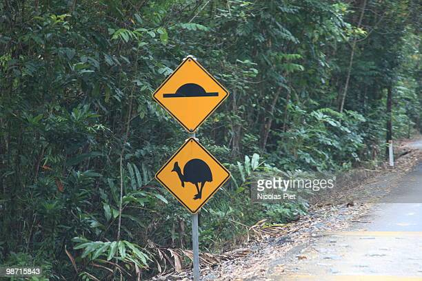 cassowaries - animal crossing stock pictures, royalty-free photos & images