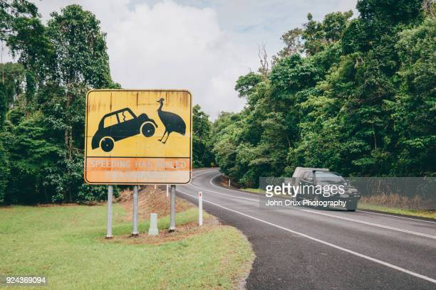 cassowary sign queensland - roadkill stock photos and pictures