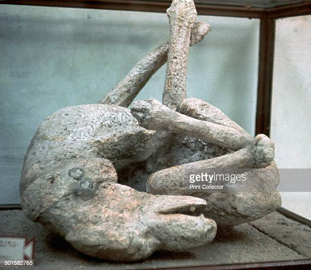 Cast of a chained dog struggling to free itself from Pompeii 1st century