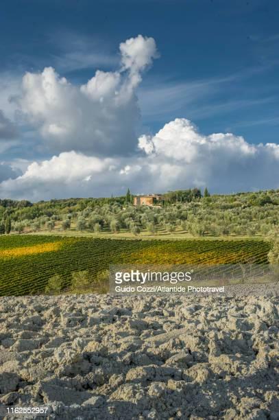 castel giocondo, landscape and vineyards - image foto e immagini stock