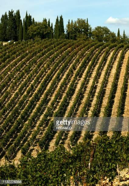Castello di Ama winery Vigneto Montebuoni vineyard Borgo di Ama Localitˆ Ama Gaiole in Chianti Tyscany Italy Europe