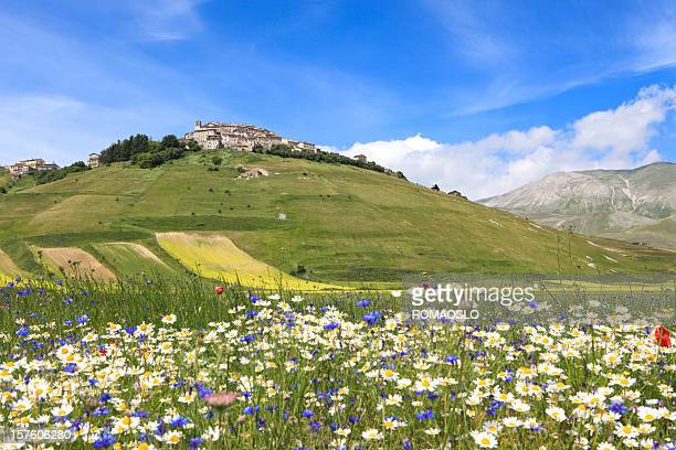 castelluccio and meadow, umbria italy - castelluccio stock photos and pictures