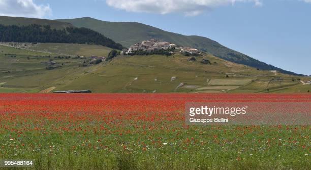 Castelluccio di Norcia during the annual blossom in Castelluccio on July 10, 2018 in Castelluccio di Norcia near Perugia, Italy.
