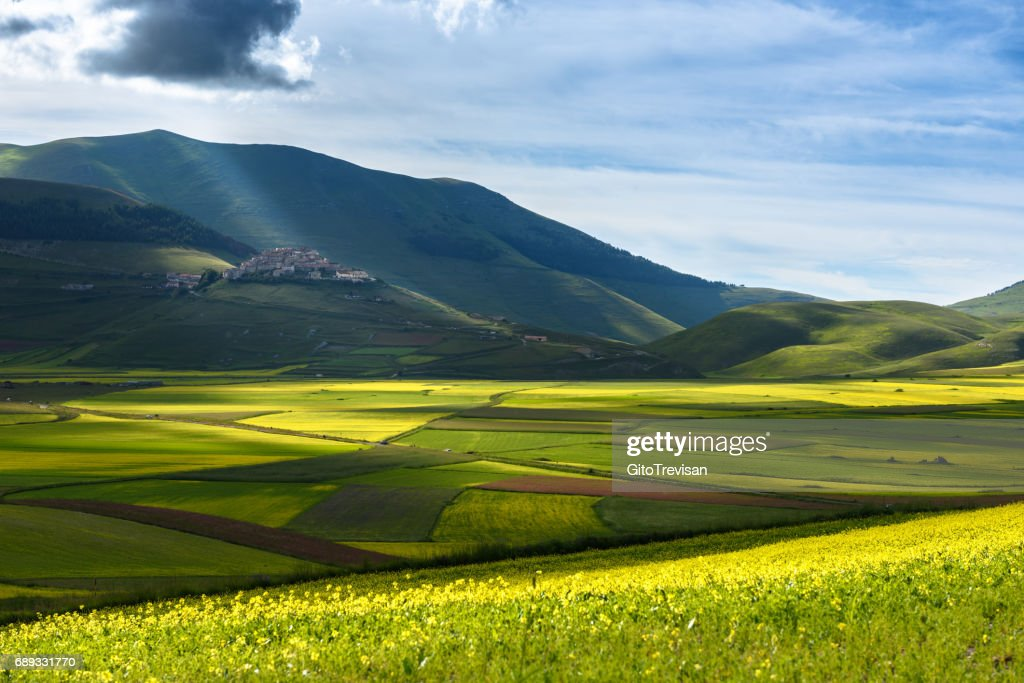 Castelluccio di Norcia - Lentil flowering : Stock Photo