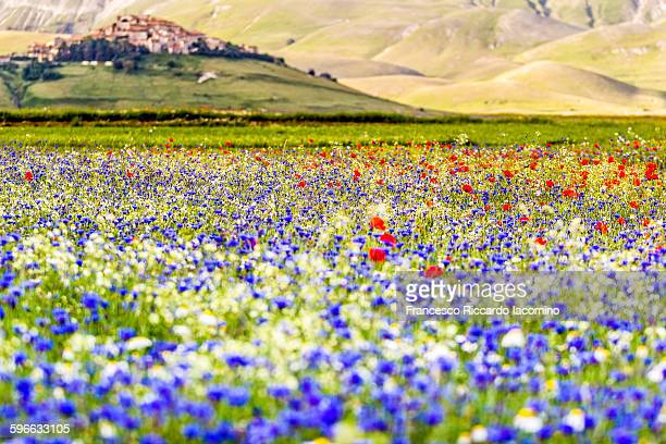castelluccio di norcia - castelluccio stock photos and pictures