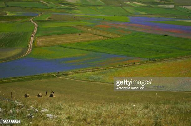castelluccio - antonella stock photos and pictures
