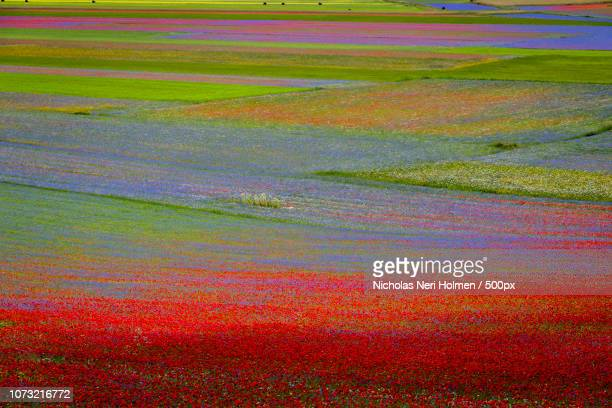 castelluccio red passion - castelluccio stock photos and pictures