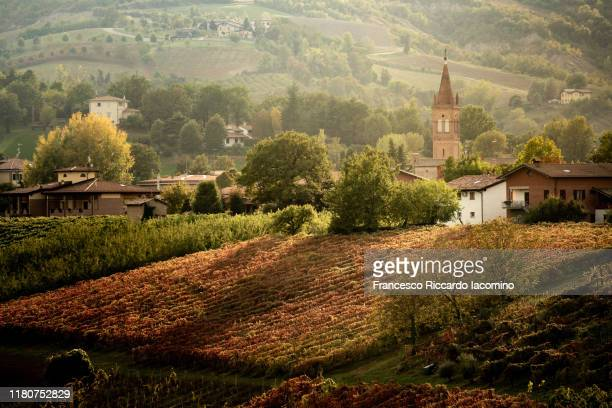 castelvetro, modena, emilia romagna, italy. vineyards in autumn - エミリア・ロマーニャ ストックフォトと画像