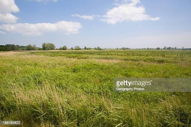 Castle marshes in the River Waveney flood plain near Barnby Suffolk England